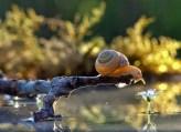 snail_tale_01