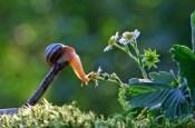 snail_tale_07
