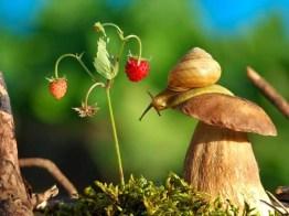 snail_tale_14