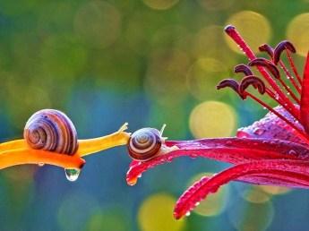 snail_tale_19