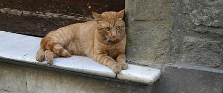 gatto_rosso