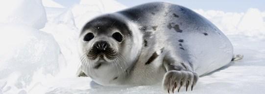 seal_eappeal_header.jpg_10