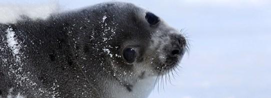 seal_header