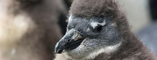 penguin_header3