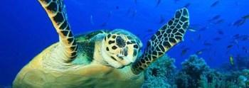 turtle-550