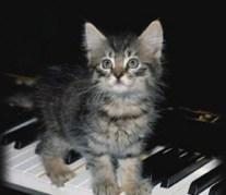 PianoKittyD1