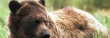 grizzlyhunt