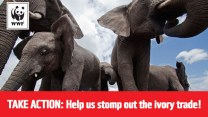 Advocacy_Email_Action