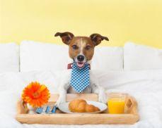 cane-colazione-id16123