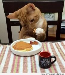 divertente-gatto-che-fa-la-colazione