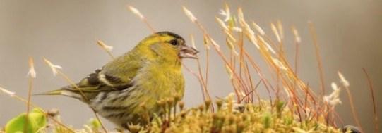 yellowbird5502