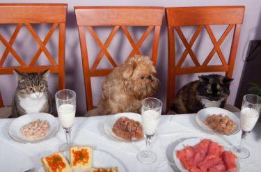 san-valentino-2012-con-gli-animali-domestici