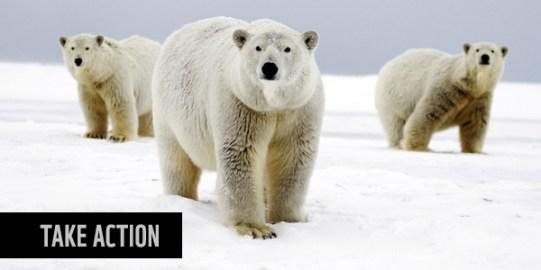 1511-polar