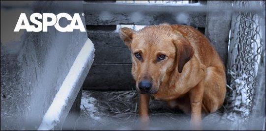 ASPCA_Dog_2
