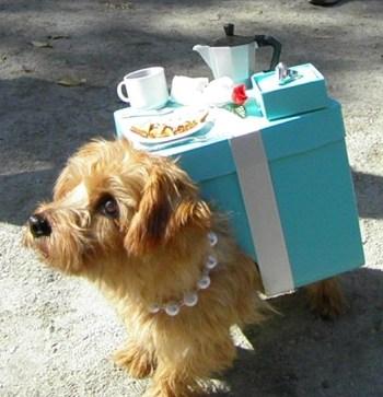 colazione-con-tiffany