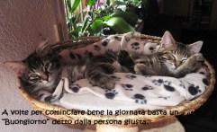 gatti-cuccia