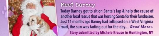 rescuestories-eb_575x12barney