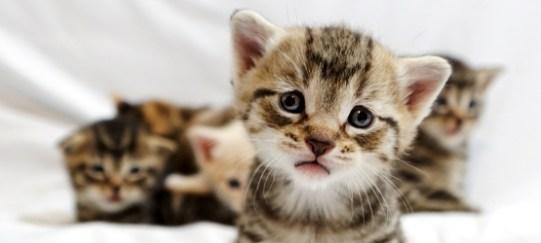 Greater-Good-Kitten-Photo
