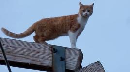 kitty-kZrF-U10701154402325XSD-1024x576@LaStampa.it