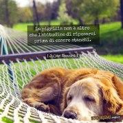 renard-pigrizia-riposo-stanchezza