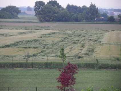 giu 12 cerchi nel grano campo dei fiori (3)