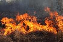 06032015 incendio parco groane foto di matteo turconi (15)