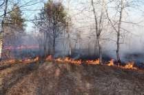 06032015 incendio parco groane foto di matteo turconi (6)