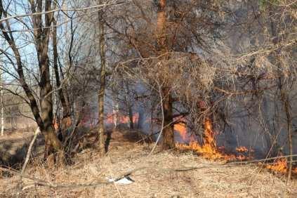 06032015 incendio parco groane foto di matteo turconi (9)