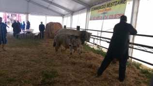 fiera bestiame 25042017 (9)