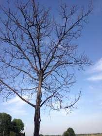 20170714 pianta abbattere cassina (3)