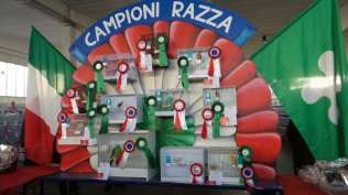 20171111 competizione ornitologica regionale saronno (7)