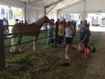 20180422 fiera del bestiame di origgio cavalli (2)