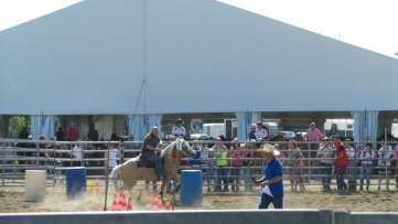 20180422 fiera del bestiame di origgio cavalli (6)