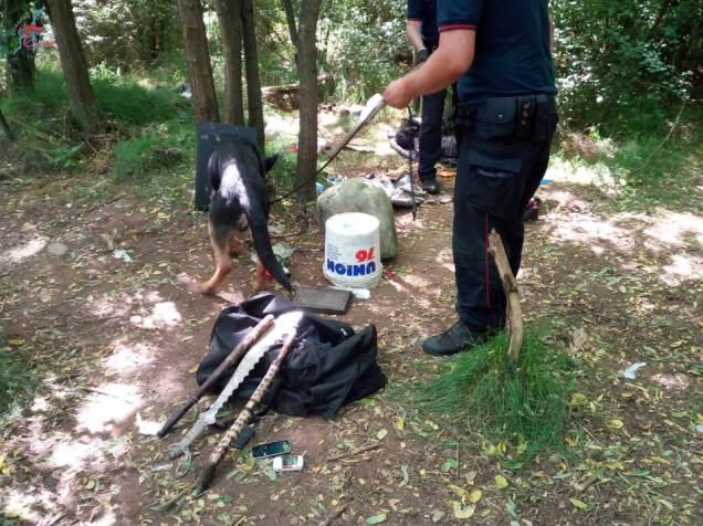 gazebo della droga nel bosco (4)