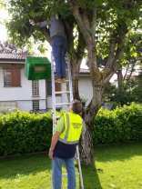 provic gerenzano salvaggio sciame api (1)