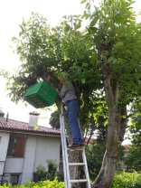 provic gerenzano salvaggio sciame api (2)