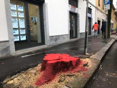 20190130 ceppi rossi via roma abbattimenti bagolari (3)