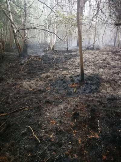 ceriano incendio bosco (4)