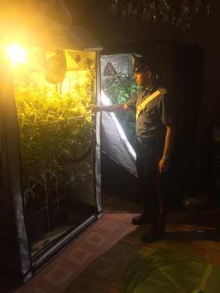 20190823 marijuana piantagone carabinieri (1)
