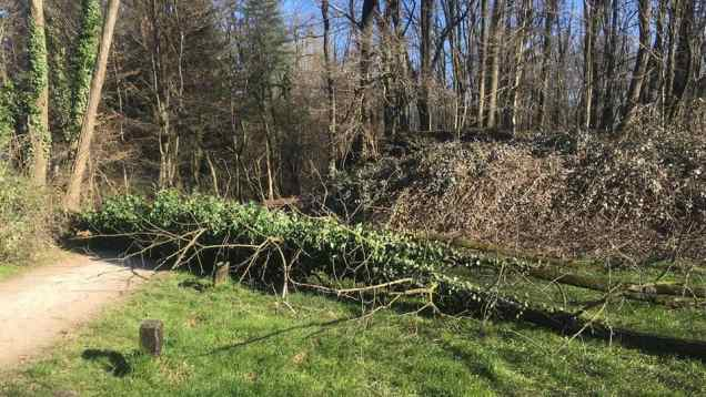 albero caduto misinto parco groane