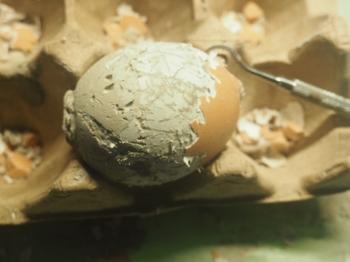 Abpellen der Eierschale