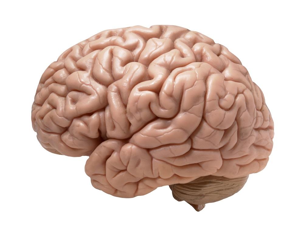 Di che colore  il cervello  Il Sito Delle Risposte