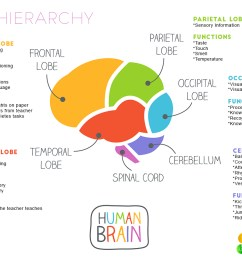 brain hierarchy when your child s lower brain levels are sensory processing activities sensory processing activities [ 1274 x 800 Pixel ]