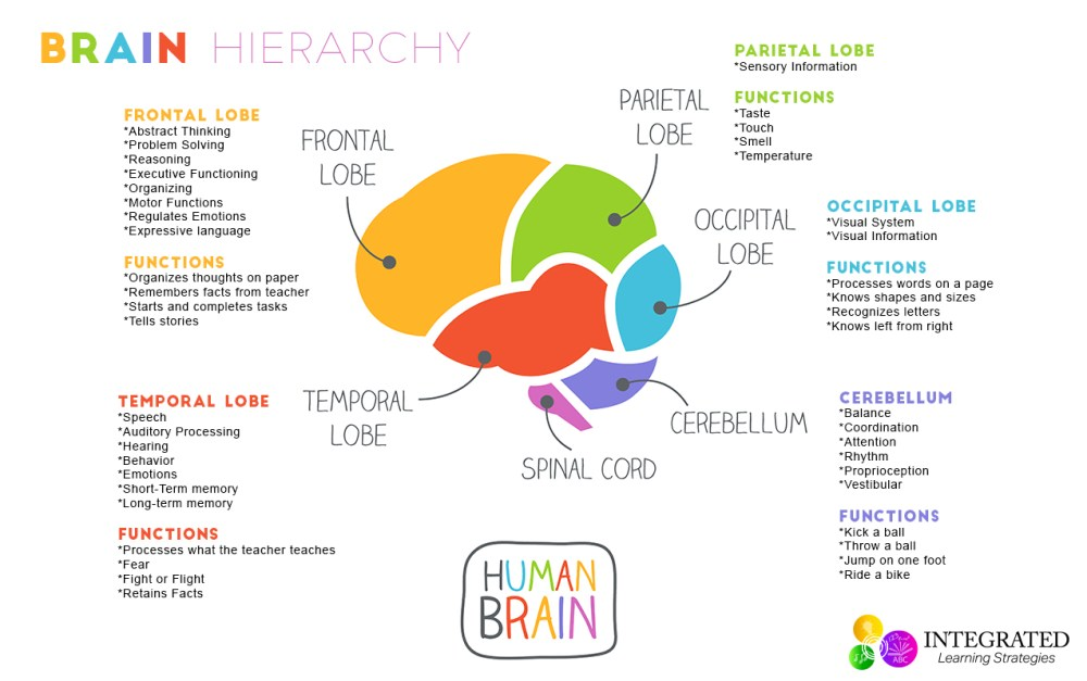medium resolution of brain hierarchy when your child s lower brain levels are sensory processing activities sensory processing activities