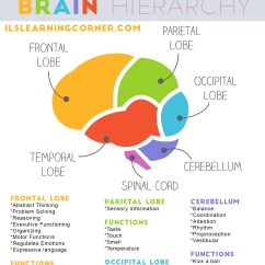 Memory Hierarchy Diagram Spark Plug Wires Brain When Your Childs Lower Levels Are