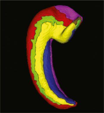 3D ippocampo