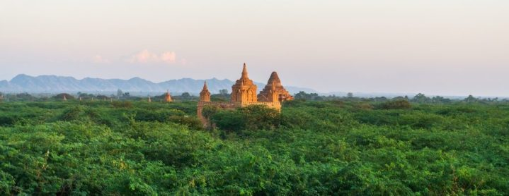 Temples entourés de jungle à Bagan