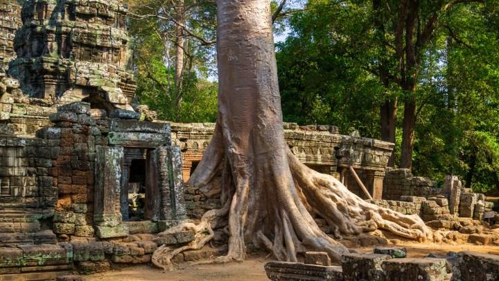 Porte-folio : Dans les temples d'Angkor devenus déserts