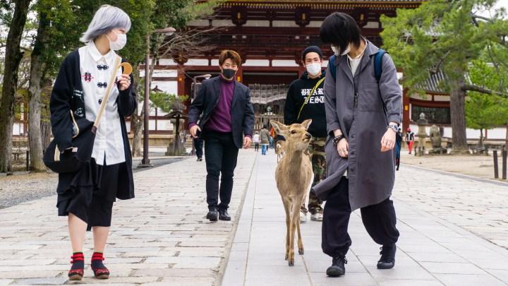 Porte-folio : Nara, l'Histoire et la nature