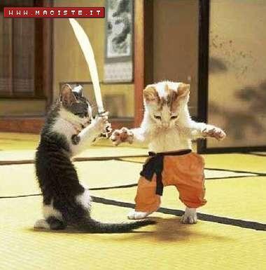 lotta-gatti.jpg